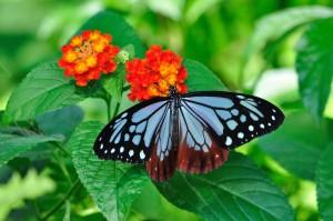 【性格心理テスト】裸のイヴと一匹の蝶々