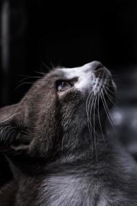 【恋愛心理テスト】 猫にごほうび