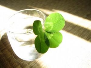【恋愛心理テスト】四つ葉のクローバー