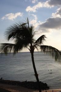 【恋愛心理テスト】無人島のヤシの木