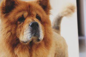 dog-1030992_640