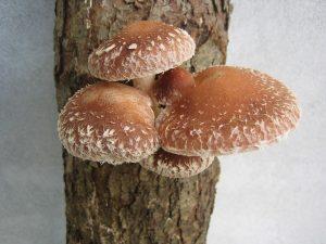 fungus-448501_640