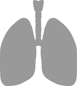 lungs-306032_640